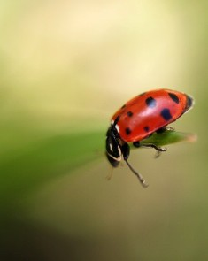 lady beetle on the edge